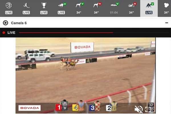 Online camel race